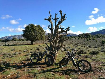 Itinerario MTB Sardegna: Supramonte, vegetazione particolare